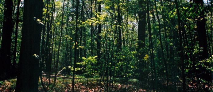 sacredgrove-694